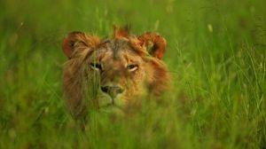 grumeti-singita-lions_640_360_80_s_c1