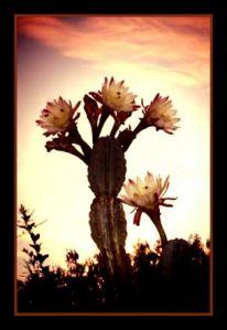 cactus flower art