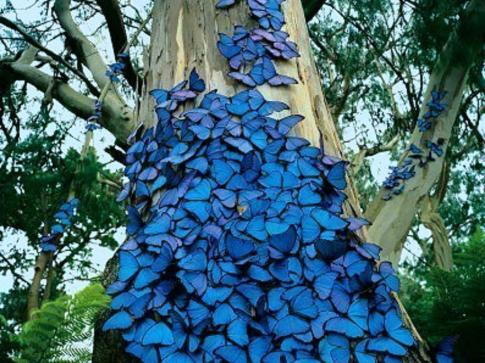butterflies_tree_blue_animals_1024x768_hd-wallpaper-1886133