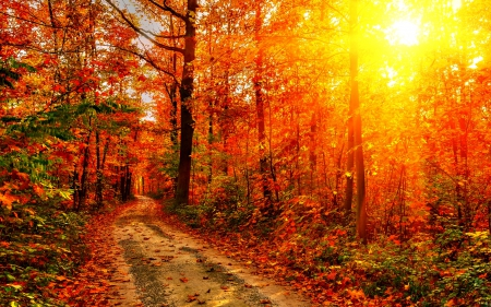 Autumn-Forest-Path-2
