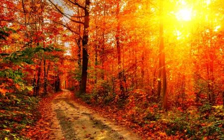 Autumn-Forest-Path-2