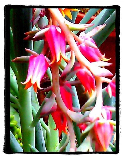 Album succulent flowers